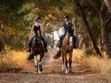 Jezdecké rady a typy