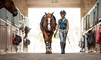 kůň a jezdec