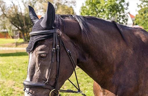 detail koně