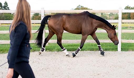 kůň při lonžování