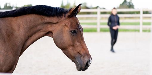 vztah člověka a koně