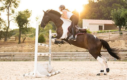 kůň skákající přes překážky