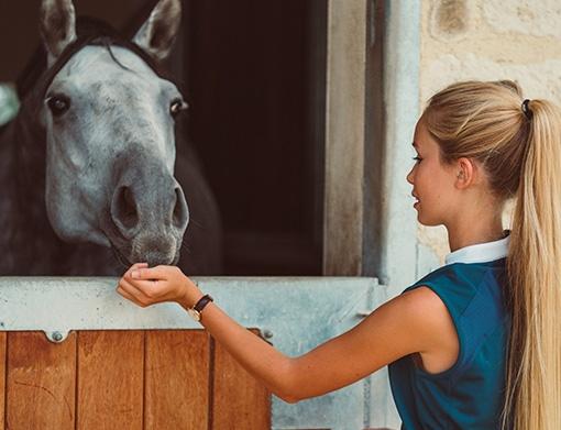 krmení koně