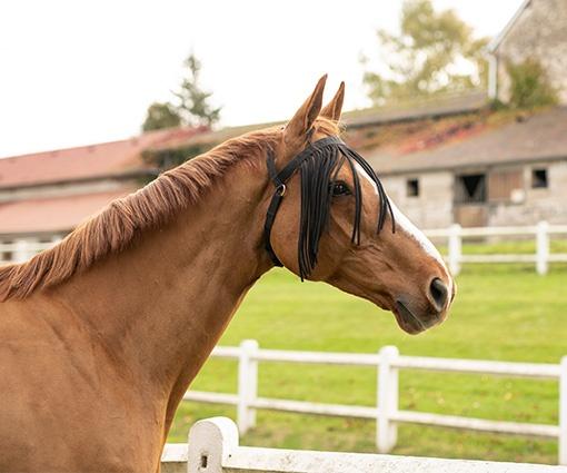 třásně pro koně proti hmyzu