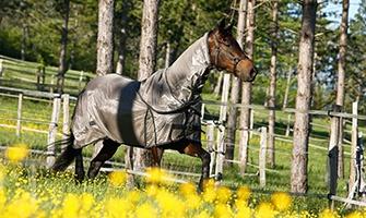 ochranný oblek pro koně proti hmyzu
