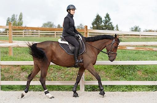 jezdkyně na koni