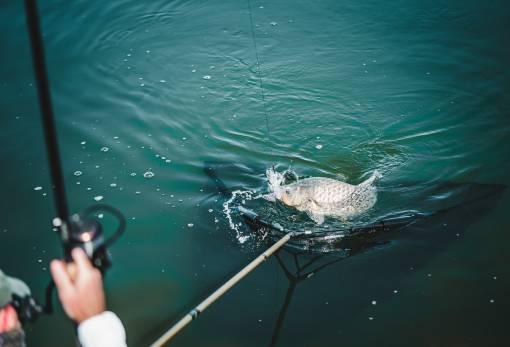 podběráky na rybolov