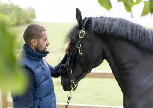 udidla pro koně